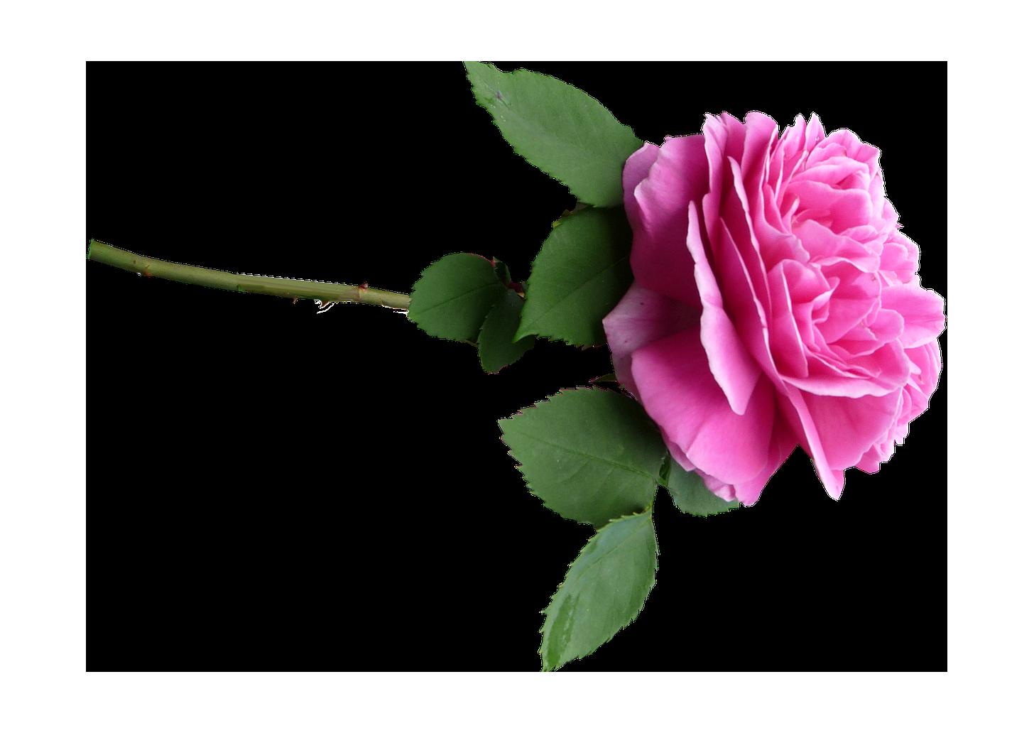 Resultado de imagen para horizontal pink flower png